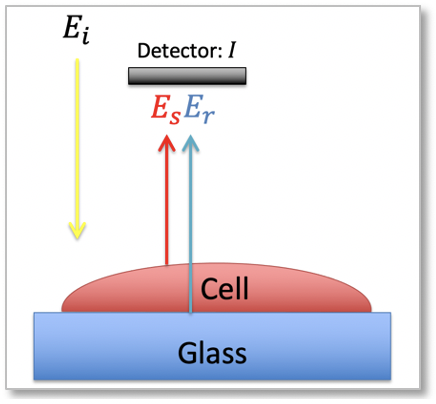PWS detector measuring light reflection in a cell